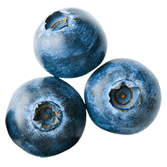 Image of Blueberries for the Printable Menus Button